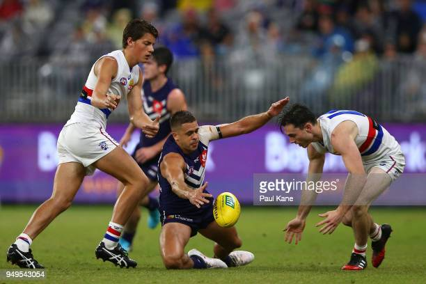 Stephen Hill of the Dockers contests for the ball during the round five AFL match between the Fremantle Dockers and the Western Bulldogs at Optus...