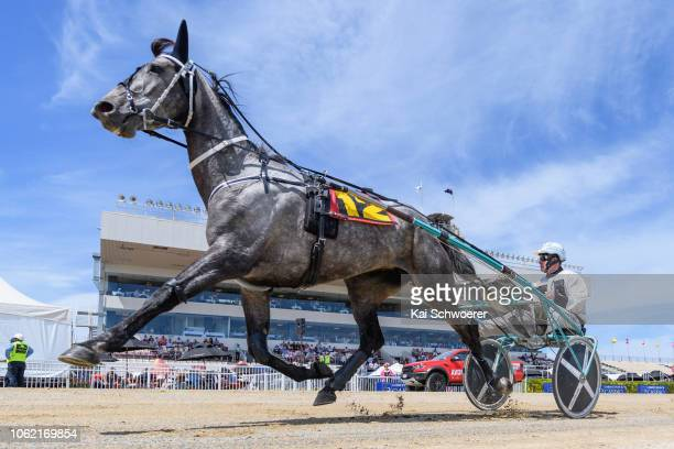 Stephen McNally driving Monrika warms up prior to Race 1 Metropol Mobile Trot during Show Day Races at Addington Raceway on November 16 2018 in...