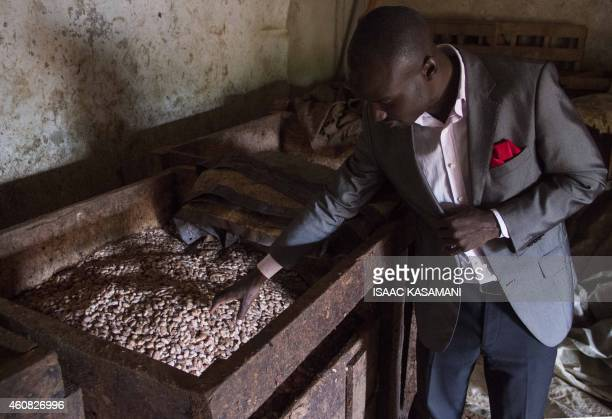 Stephen Sembuya cofounder of the Pink Food Industries looks at the cocoa fermenting at their factory in Wakiso on November 21 2014 Two Ugandan men...