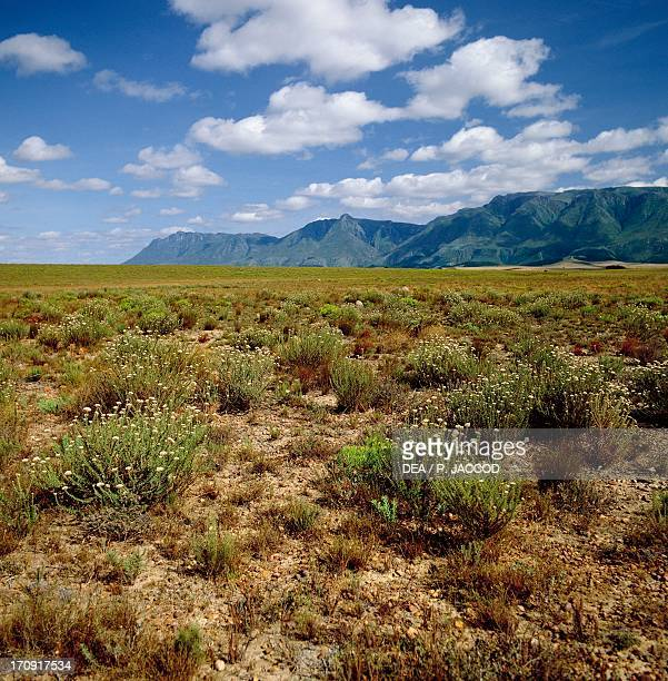 Steppe Bontebok National Park South Africa