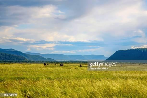 steppe in the summer, khakassia, russia - steinzeit stock-fotos und bilder