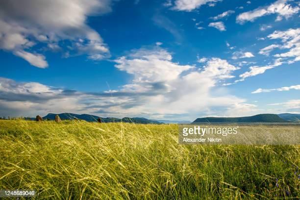 steppe on a summer day - 平地 ストックフォトと画像