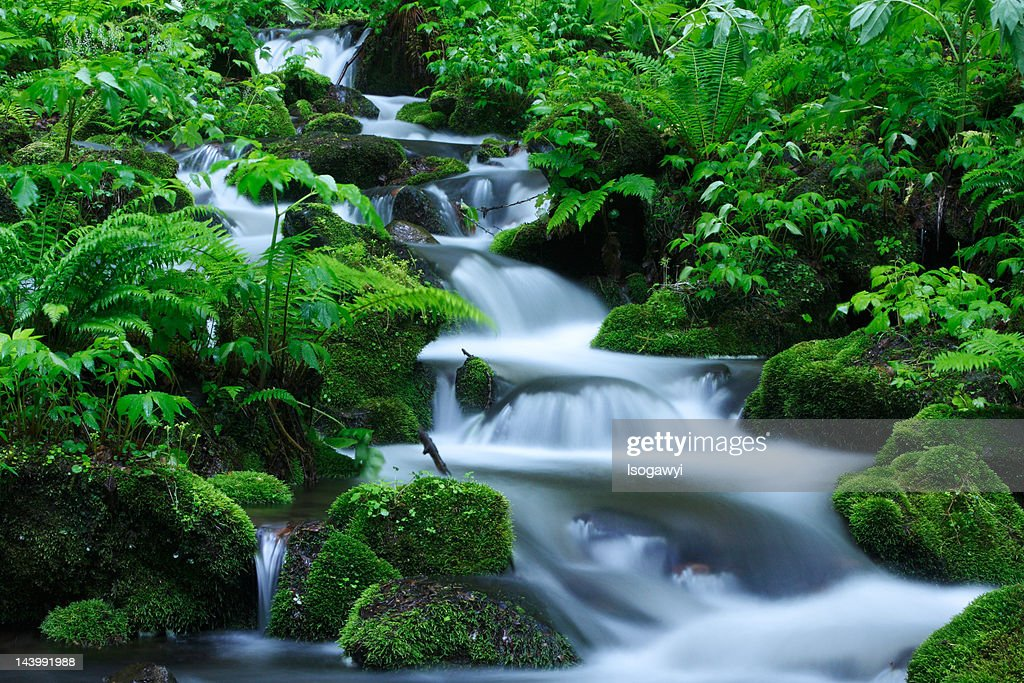 Stepped Stream : ストックフォト