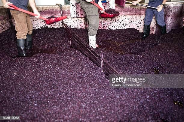 stepping on grapes on winery,alentejo. - parte inferior imagens e fotografias de stock