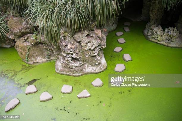 stepping stones over a green pond - quinta da regaleira photos stock pictures, royalty-free photos & images