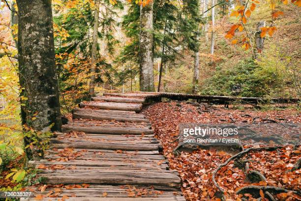 Steps Amidst Trees In Forest During Autumn