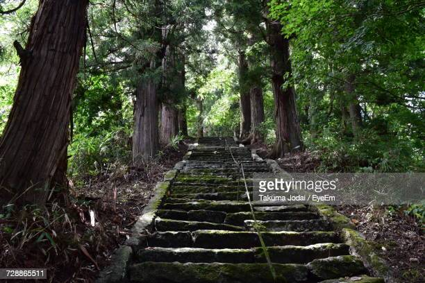 Steps Amidst Trees In Forest