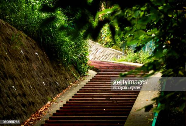 Steps Amidst Trees