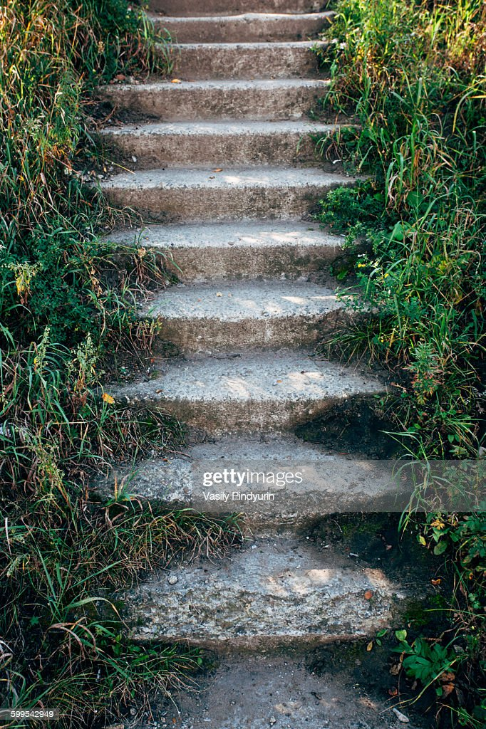 Steps in forest : Stock Photo
