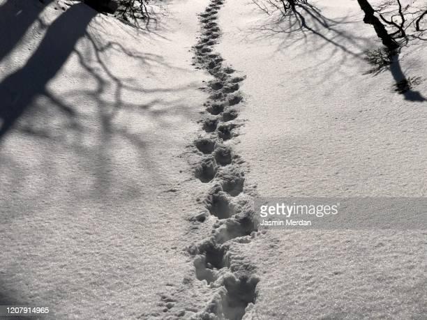 steps in snow mountain forest - jasmin sturm stock-fotos und bilder