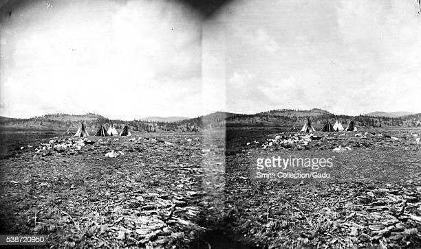 Stereograph of a camp and herd of animals belonging to members of the Ute tribe of Native Americans Colorado 1875 Image courtesy USGS