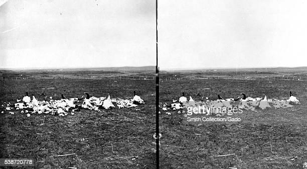 Stereograph of a pile of buffalo bones near Colorado City Colorado 1870 Image courtesy USGS