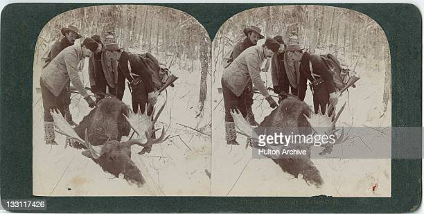 A stereoscopic image of a group of hunters with a dead moose Alaska circa 1900