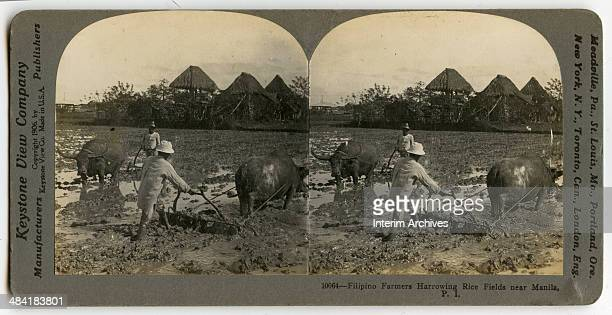 Stereoscopic view showing Filipino farmers harrowing rice fields using water buffalo or carabao prior to planting near Manila 1906 Huts are visible...