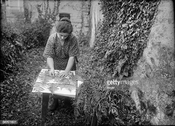Sterilization of ferns Ferns between blotting paper sheets of oxalic acid France 1925