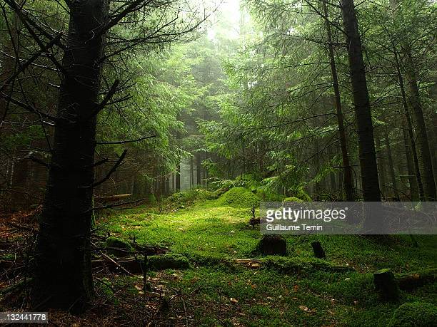 sterious forest - forest stock pictures, royalty-free photos & images