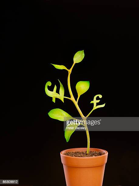sterling pound money tree. - money tree stock photos and pictures