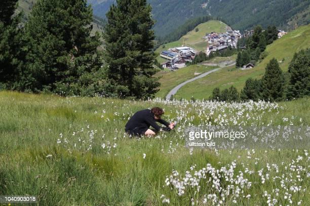 Österreich Tirol Ötztal Alpen Sommer Tourismus Obergurgl Rotmoostal Gletscher Schmalblättriges Wollgras Eriophorum angustifolium
