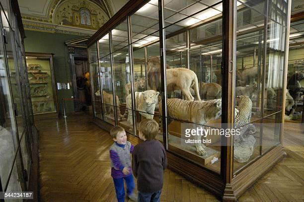 Österreich Wien Zoologie des Naturhistorischen Museum