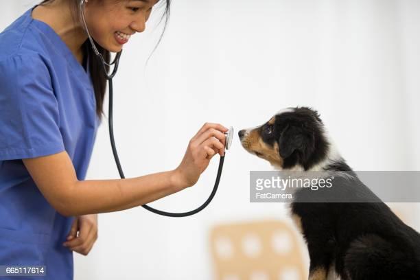 Stethoscope Inspection
