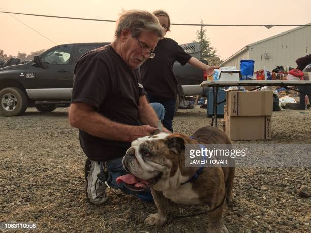 Steve Cox pets Ernie his 10yearold English bulldog before handing him over to a shelter in Chico on November 16 2018 Pets are entrusted to 3 shelters...