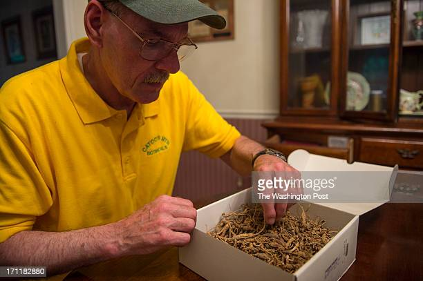 Steve Galloway owner of Catoctin Mountain Botanicals goes through a box of West Virginia ginseng roots on June 5 2013 in Jefferson Md Ginseng farmer...