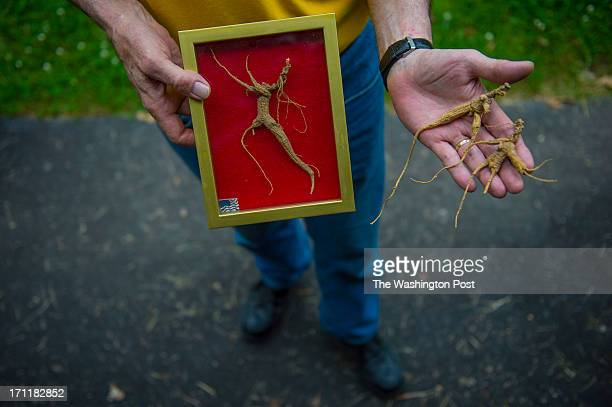 Steve Galloway owner of Catoctin Mountain Botanicals holds ginseng roots on June 5 2013 in Jefferson Md The roots are more sought after due to their...