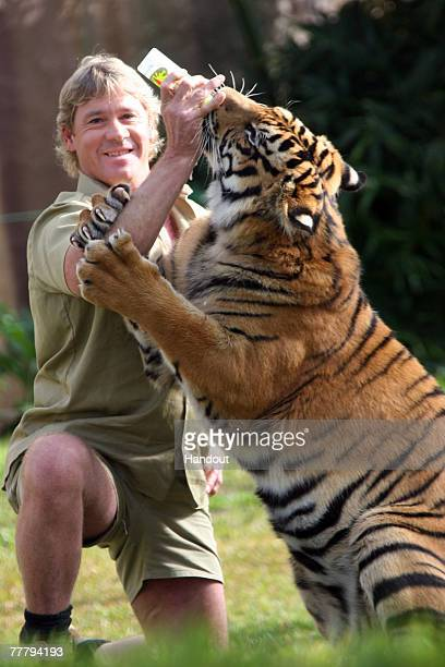 Steve Irwin poses with a tiger at Australia Zoo June 1, 2005 in Beerwah, Australia.