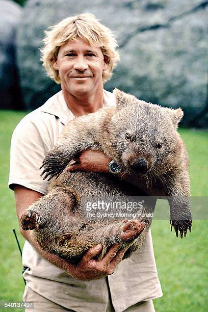 Steve Irwin with a wombat at his Sunshine Coast animal sanctuary, Australia Zoo, Queensland, 28 March 2003. SMH NEWS Picture by HEATH MISSEN