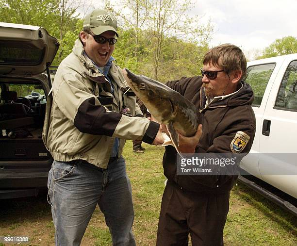 Steve Minkkinen right and Matt McCracken of Pittsburgh and Family Ties which teaches Kids about fishing try to get a handle on an Atlantic Sturgeon...