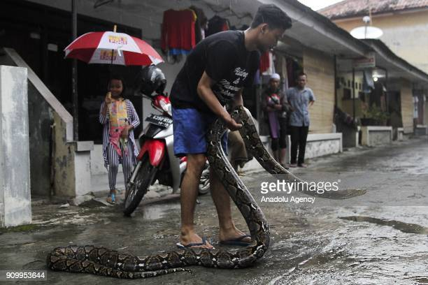 Steven Prasetyo a snake collector holds a Reticulated Python in front of his house in Jakarta Indonesia on January 23 2018 Prasetyo have three other...