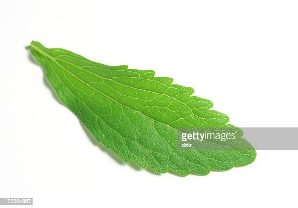 Stevia Rebaudiana Bertoni or Sweet Herb leaf