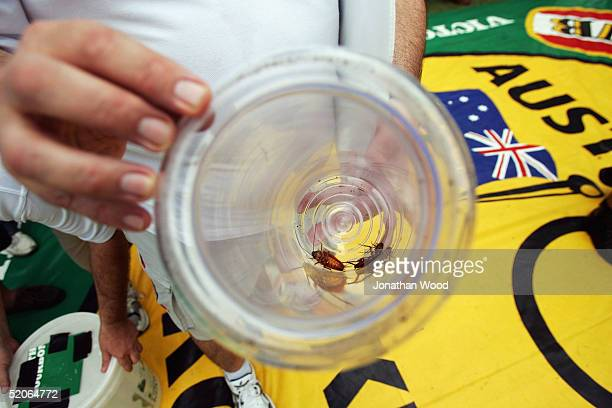 Steward holds the losing cockroaches in Race 2 during Cockroach Racing at the Story Bridge Hotel which was held as part of Australia Day celebrations...