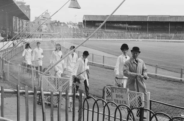 Stewards and a dog handler parade with Greyhounds dog before a race at Stamford Bridge racetrack, London, UK, circa 1968.