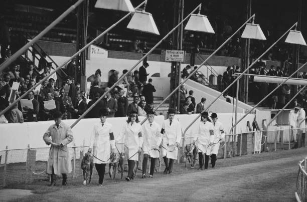 Stewards with handlers and greyhounds parading before a race at Stamford Bridge racetrack, London, UK, circa 1968.