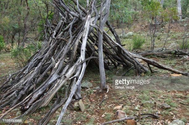 stick house made from fallen timber, mount ainslie, canberra, australian capital territory, australia - kampeertent stockfoto's en -beelden