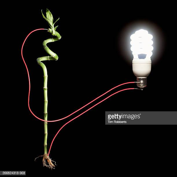stick of bamboo hooked up to light bulb, black background - black bamboo stock pictures, royalty-free photos & images