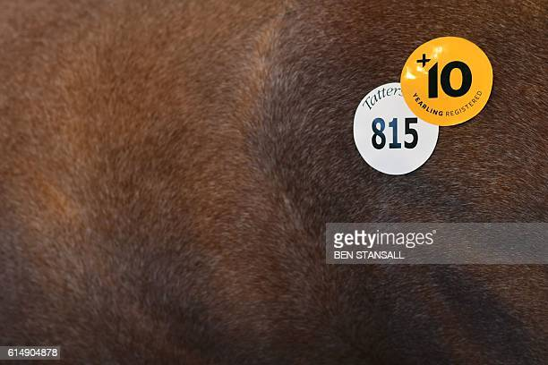 Stickers are pictured on a horse at the Tattersalls Bloodstock Auction in Newmarket north of London on October 11 2016 There may have been much...