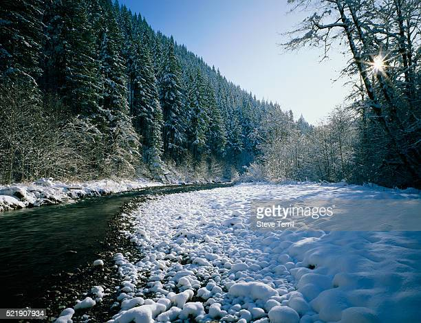still creek in mount hood national forest - mt hood national forest stock pictures, royalty-free photos & images