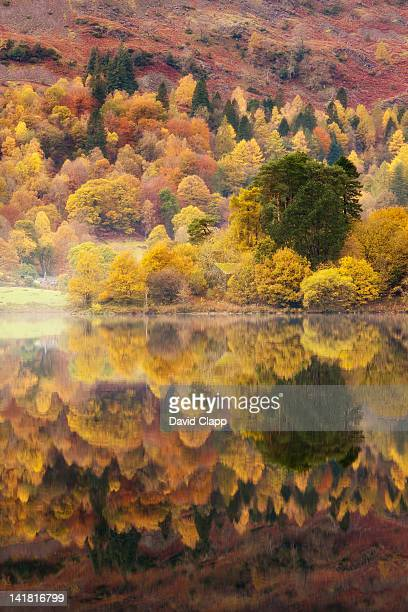 Still lakeside reflections at Grasmere in the Lake District, Cumbria, England, UK