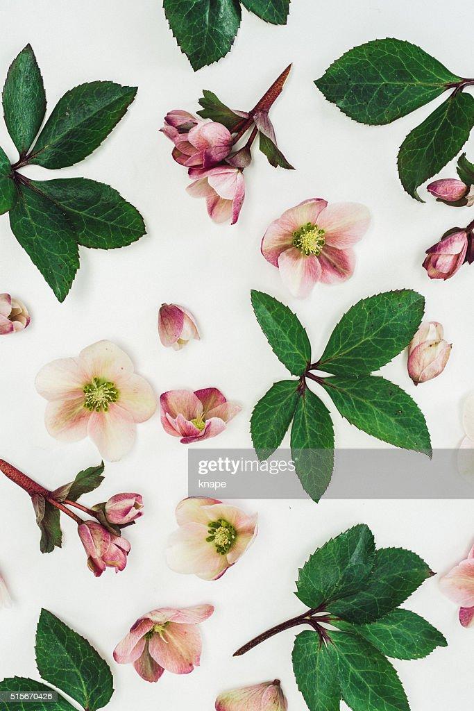 Aún vida arreglo de flores de por encima : Foto de stock