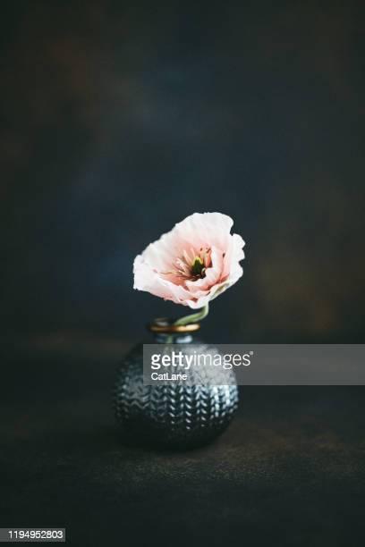stilleven achtergrond met grijze vaas en roze poppy - stilleven stockfoto's en -beelden