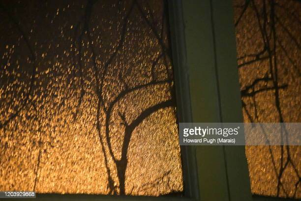 still life golden branches - howard pugh stock pictures, royalty-free photos & images