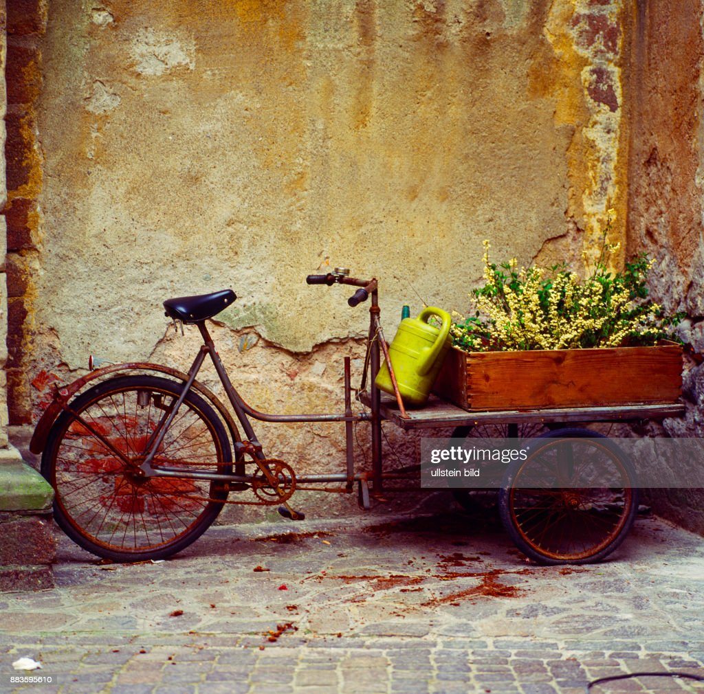 Still Life; Natura Morta; Flowers, decoration, Bicycle, old bicycle ...