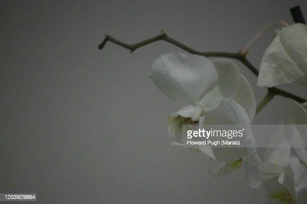 still life: nature - howard pugh stock pictures, royalty-free photos & images