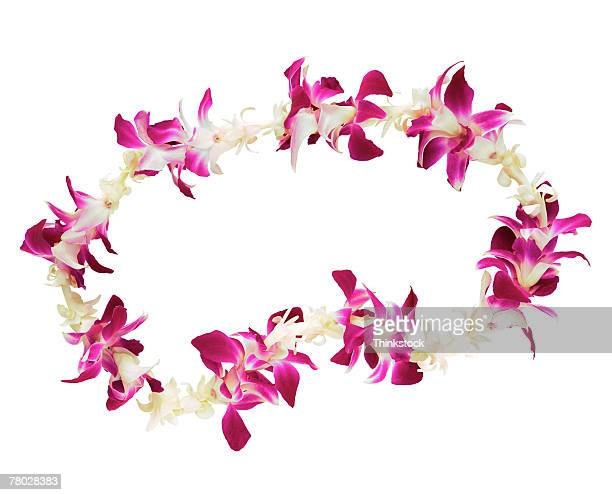 still life of a flower lei on a white background. - floral garland stock pictures, royalty-free photos & images