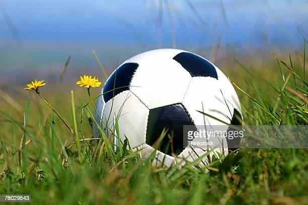 still life of a soccer ball sitting in a grassy field near two yellow wild flowers - thinkstock foto e immagini stock