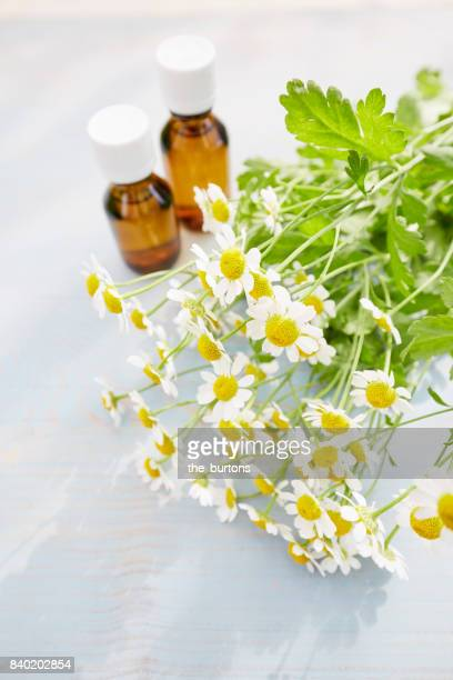 Still life of chamomile