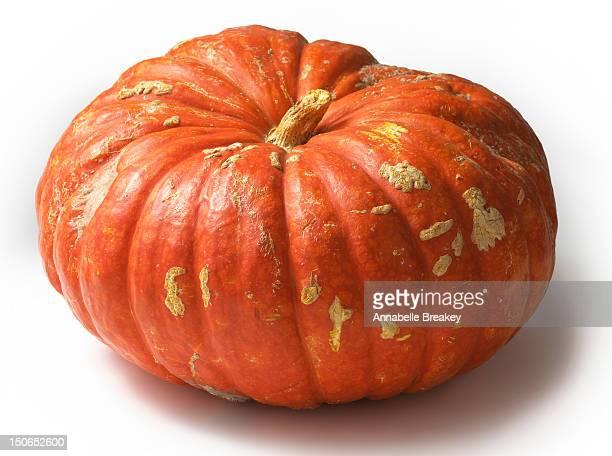 Still Life of Cinderella Pumpkin