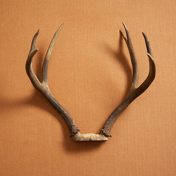 Still Life Of Deer Antlers On A Fabric Background Wall Art